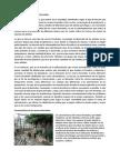 La Necesidad de Los Viveros Forestales