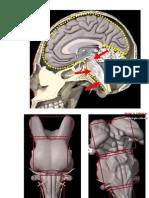 Tronco Cerebral 1