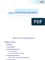 Spore Forming Bacteria
