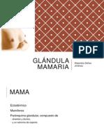 Anatomia Glandula Mamaria