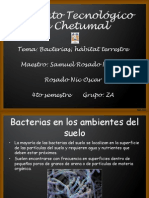 Bacterias