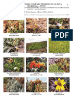 Catalogo Flora Moquegua - Puno, Tramo 5 Labor-1