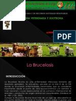 BRUCELOSIS.pptx