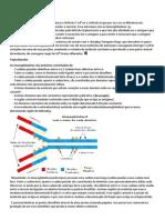Resumo+Transcrição segunda prova imunologia
