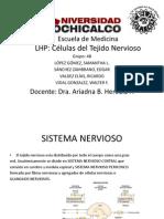Histopatologia Sistema Nervioso