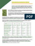 Productores Plantas Medicinales Aromaticas y Especias