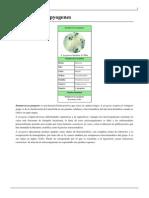 Streptococcus Pyogenes (1)