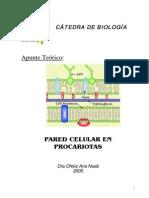 Pared Celular Procariotas
