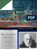 Neurona, Sinapsis y Neurotransmisores
