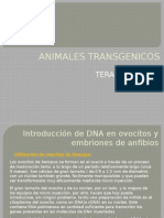 Animales Transgenicos