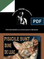 pisica_buna_de_leac.pps