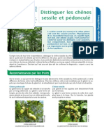 Distinguer_les_chenes_sessile_et_pedoncule.pdf