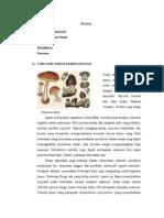 Modul Mikrobiologi FUNGI