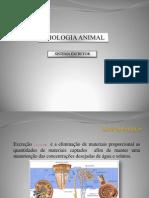 Apresenta--o de Fisiologia Animal