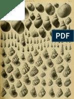 I molluschi dei terreni terziari del Piemonte e della Liguria; F. Sacco, 1891 - PARTE 9 - Paleontologia Malacologia - Conchiglie Fossili del Pliocene e Pleistocene