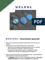 45470418-NUCLEUL-1.pdf