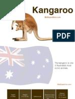 Kangaroo - The emblem of Australia