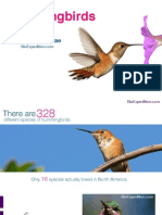 Hummingbirds - Colorful and beautiful birds
