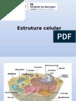 [5a Aula] Organelas e Estrutura Celular