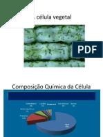 A Celula Vegetal