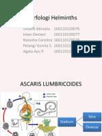 Morfologi Helminths