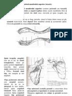 curs3 Anatomia omului.ppt
