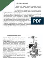 curs4 Anatomia omului.ppt