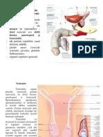 curs6 Anatomia omului.ppt