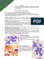 Morfo leucemias diagnostico