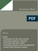 ANATOMI-AKAR.pdf