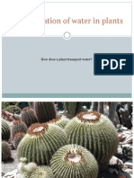 how does a plant transport water powerpoint oli ward