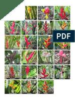 Catalogo Flores Net