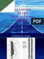 Examenes de Los Musculos Del Cuello II