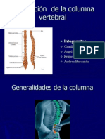 articulación columna vertebral