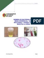 Preparación de Medios y Siembra de Bacterias en Medios de Cultivo.docx