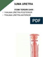 trauma uretra 1.pptx