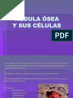 Medula Osea