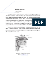 anatomi sist pernafasan.doc