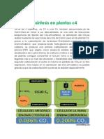 III Fotosintesis en Plantas C4