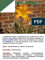 Angiospermas 4.pdf
