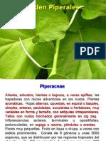 Angiospermas 6.pdf