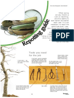 Bonsai EN Repotting Guide.pdf