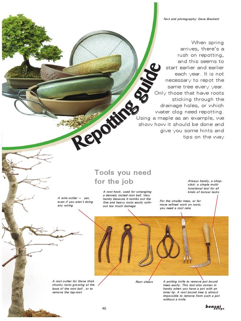 Bonsai En Repotting Guidepdf Trees Wiring Tips