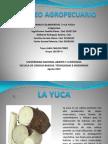 Mercadeo Agropecuario Yuca Final