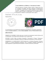 Fórmula y diagrama floral de la familia verbenacea
