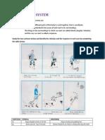 nervous system.pdf