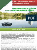 IDENTIFICACIÓN DE CIANOBACTERIAS