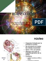 Nucleo Celular - Ciclo Celular