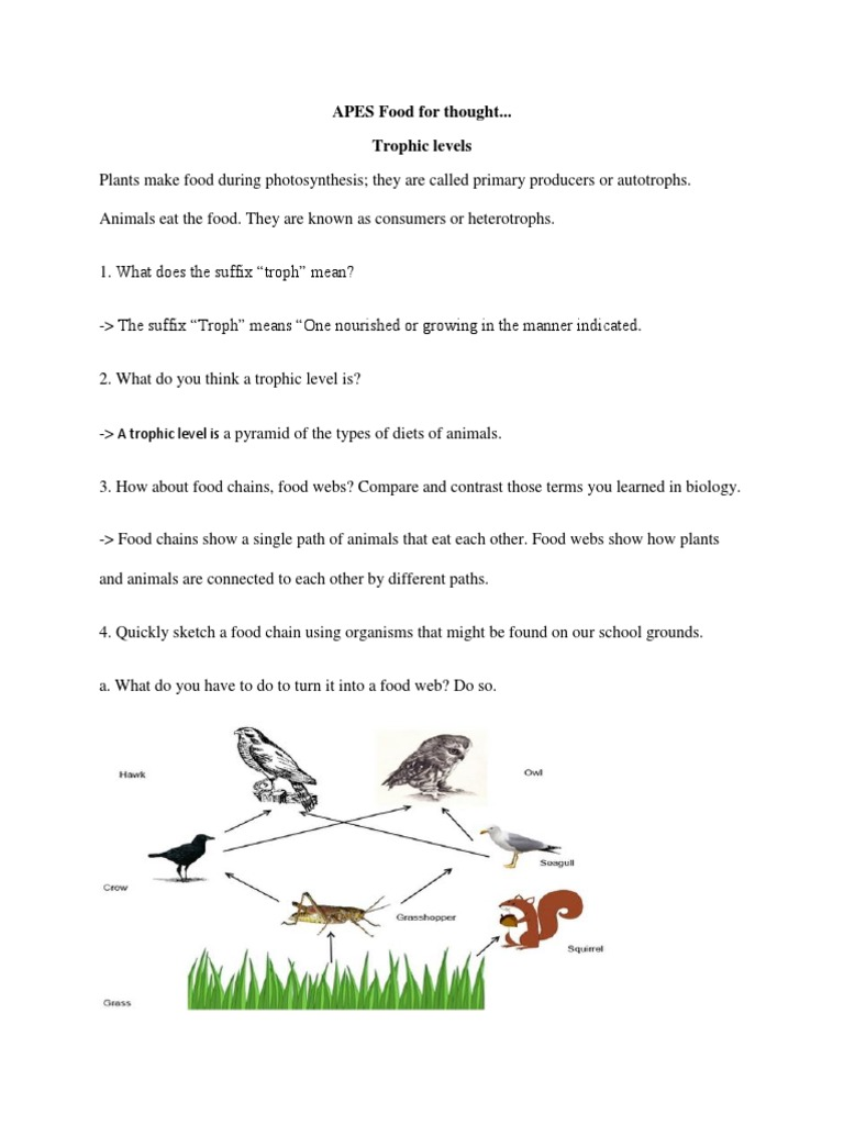 Homeschooling Printable Worksheets Excel Apes Food For Thought  Food Web  Soybean Reading Comprehension Worksheets 5th Grade Pdf with Printable Worksheets For Second Grade Pdf  Word Search Worksheets