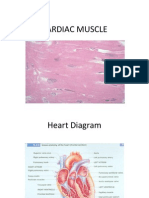 CARDIAC MUSCLE.ppt